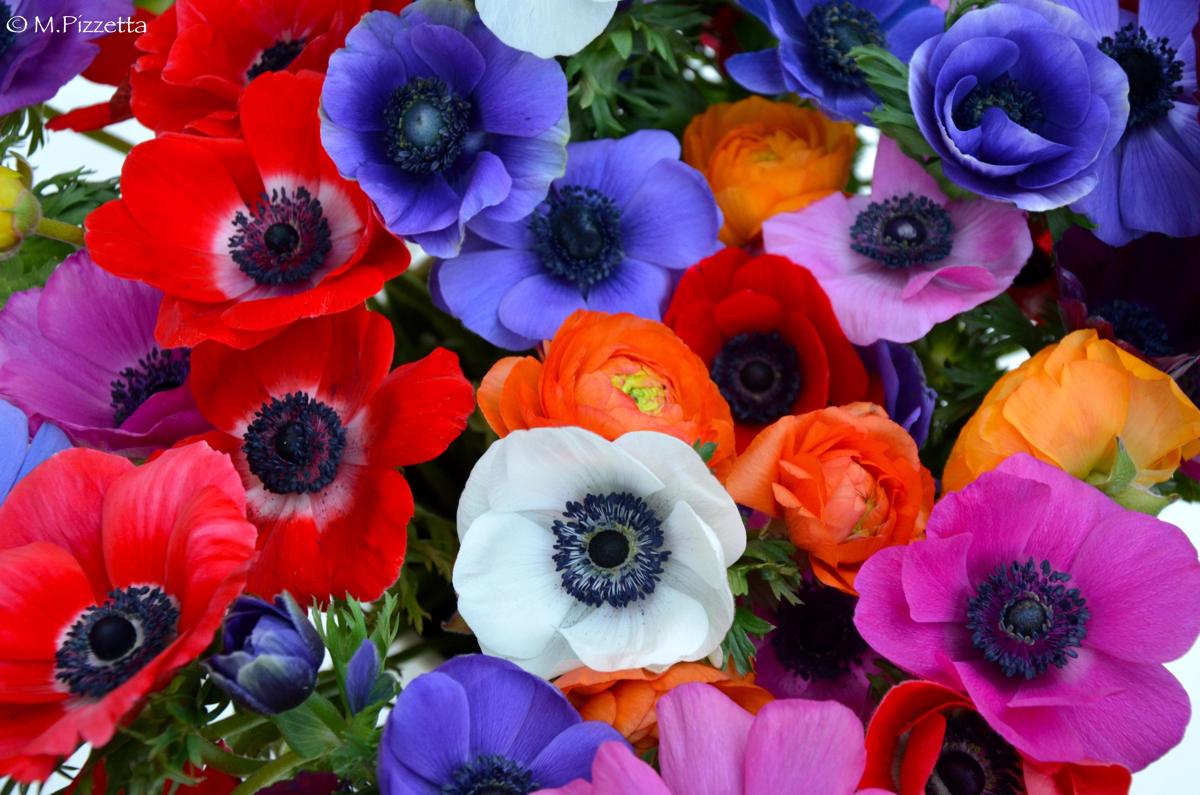 Fleurs ape 3 chens sur lman publi 27 avril 2015 at 4928 3264 in fleurs altavistaventures Choice Image